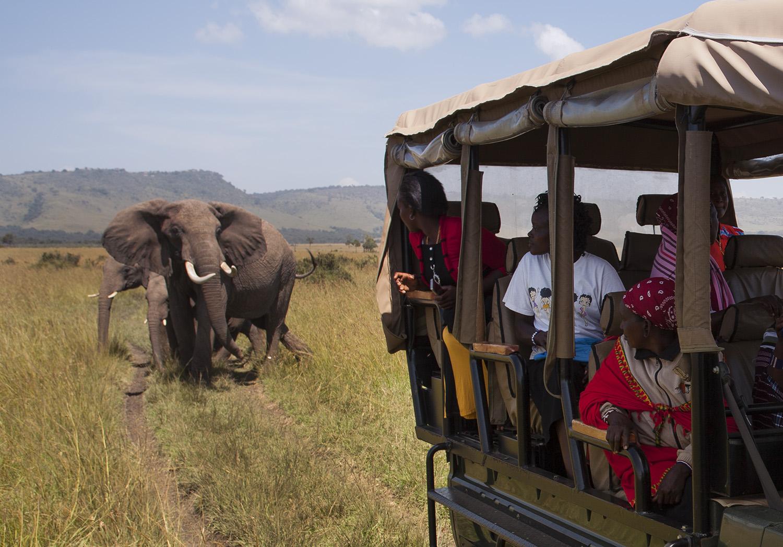 Mammas drive and elephant