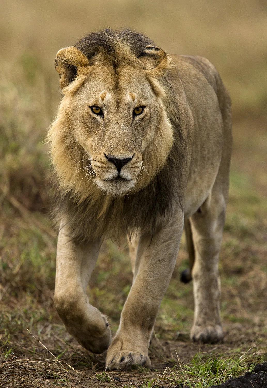 Nomadic male walking