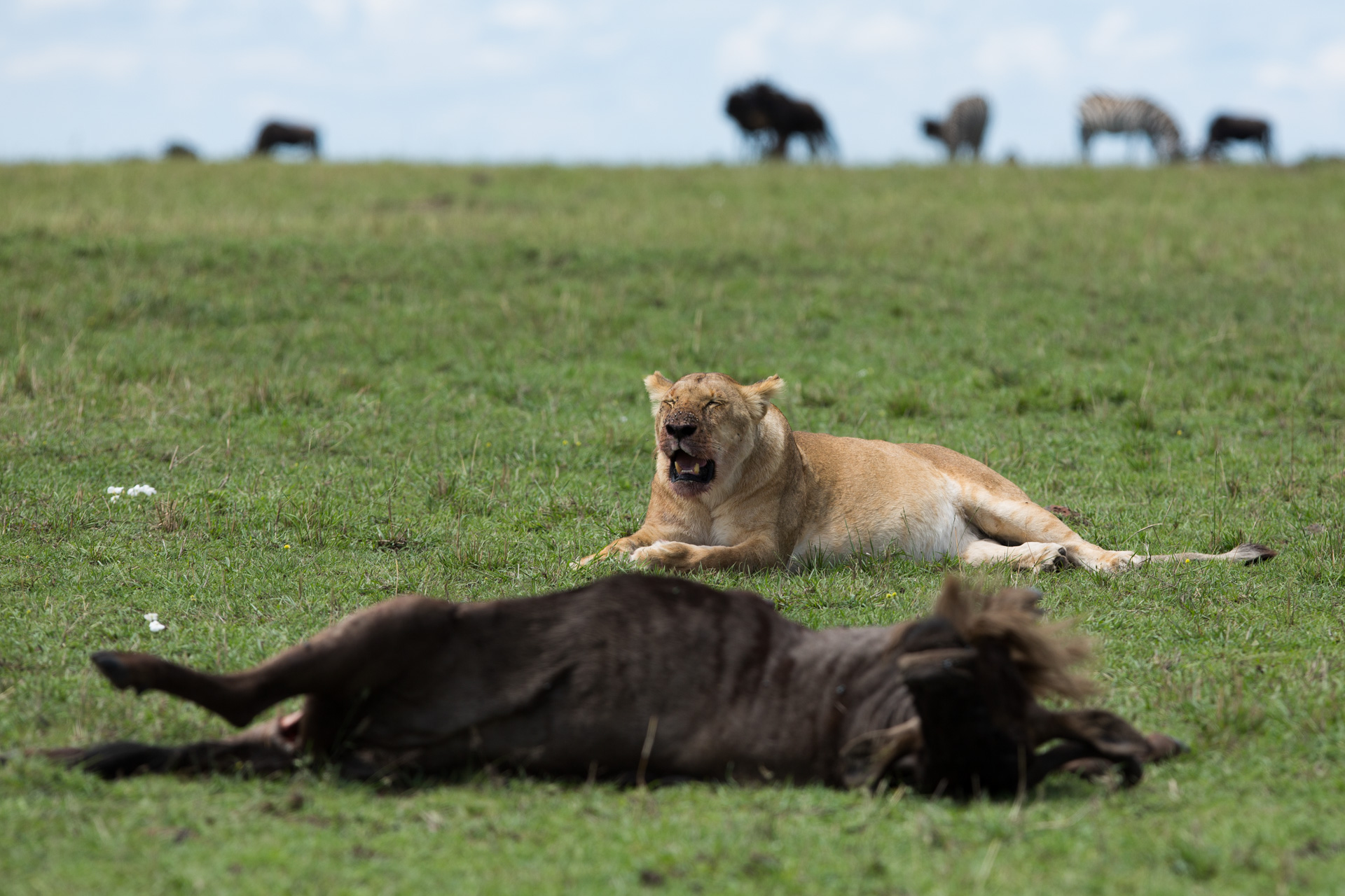 lion and wilde dead