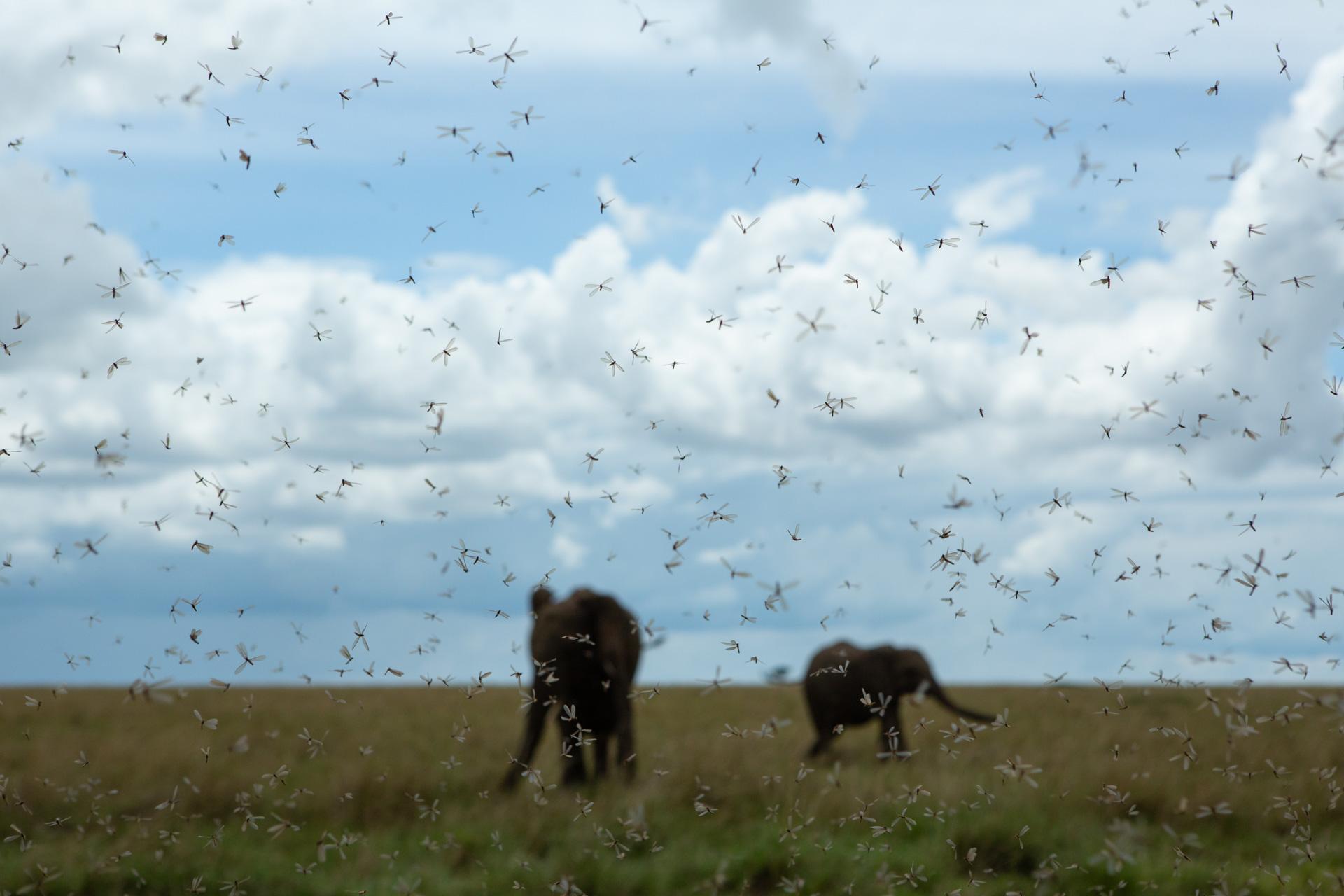 Elephants and termites