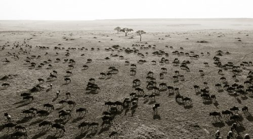 Like ants across the short grasslands