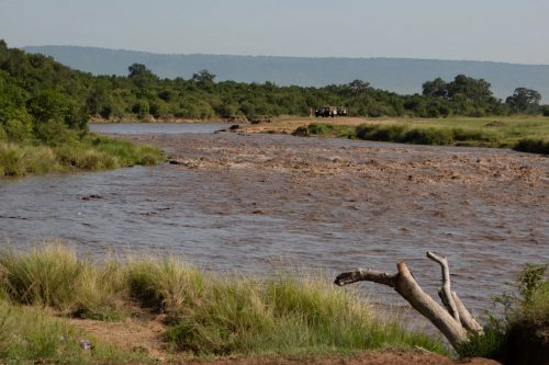 Two years ago the Mara River was full from heavy rains