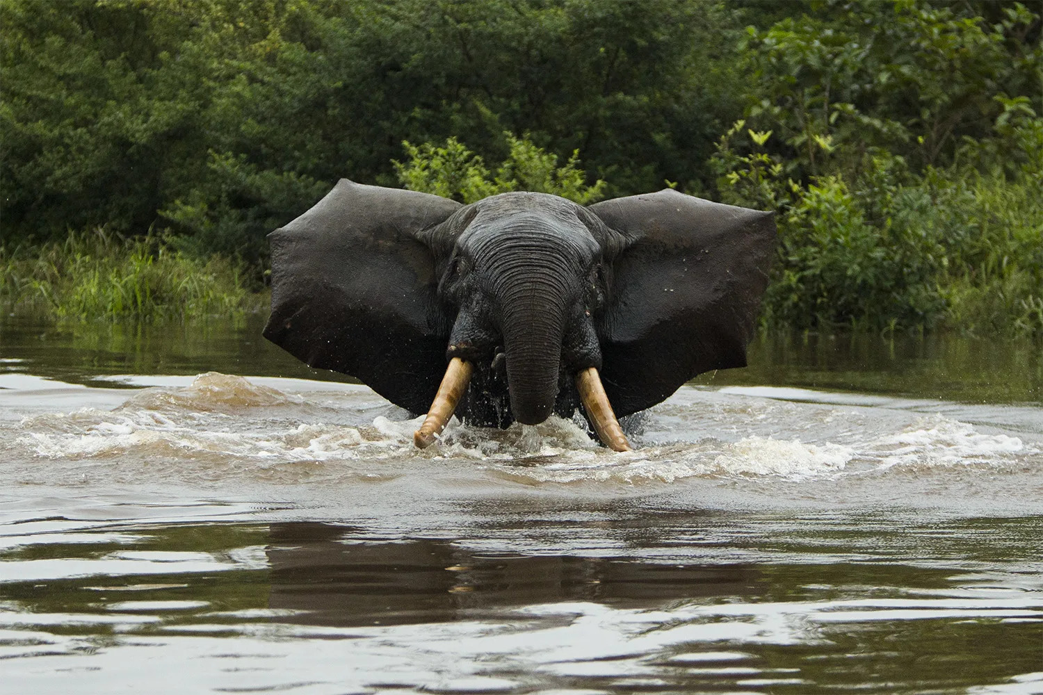 Elephant and river frontal