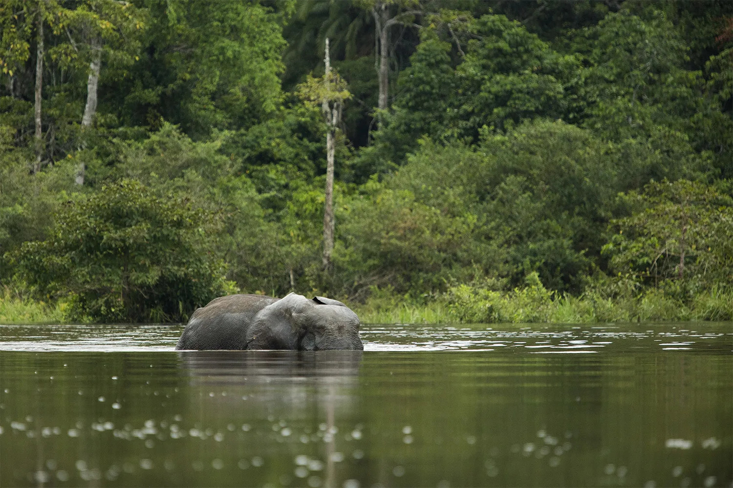 Elephant and river