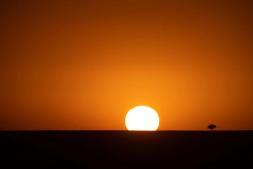The sun comes up with just a single Balanites tree to welcome it