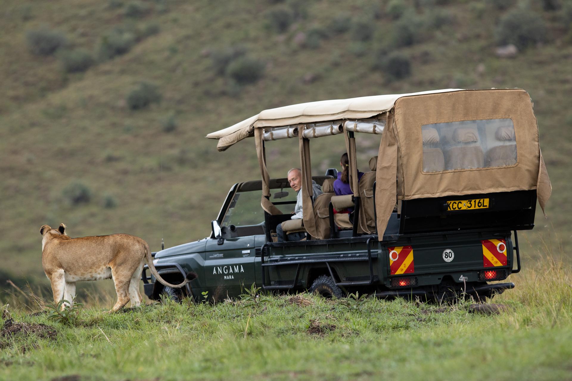 Lion and Angama vehicle