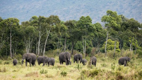 An elephant family set against the backdrop of the Oloololo Escarpment
