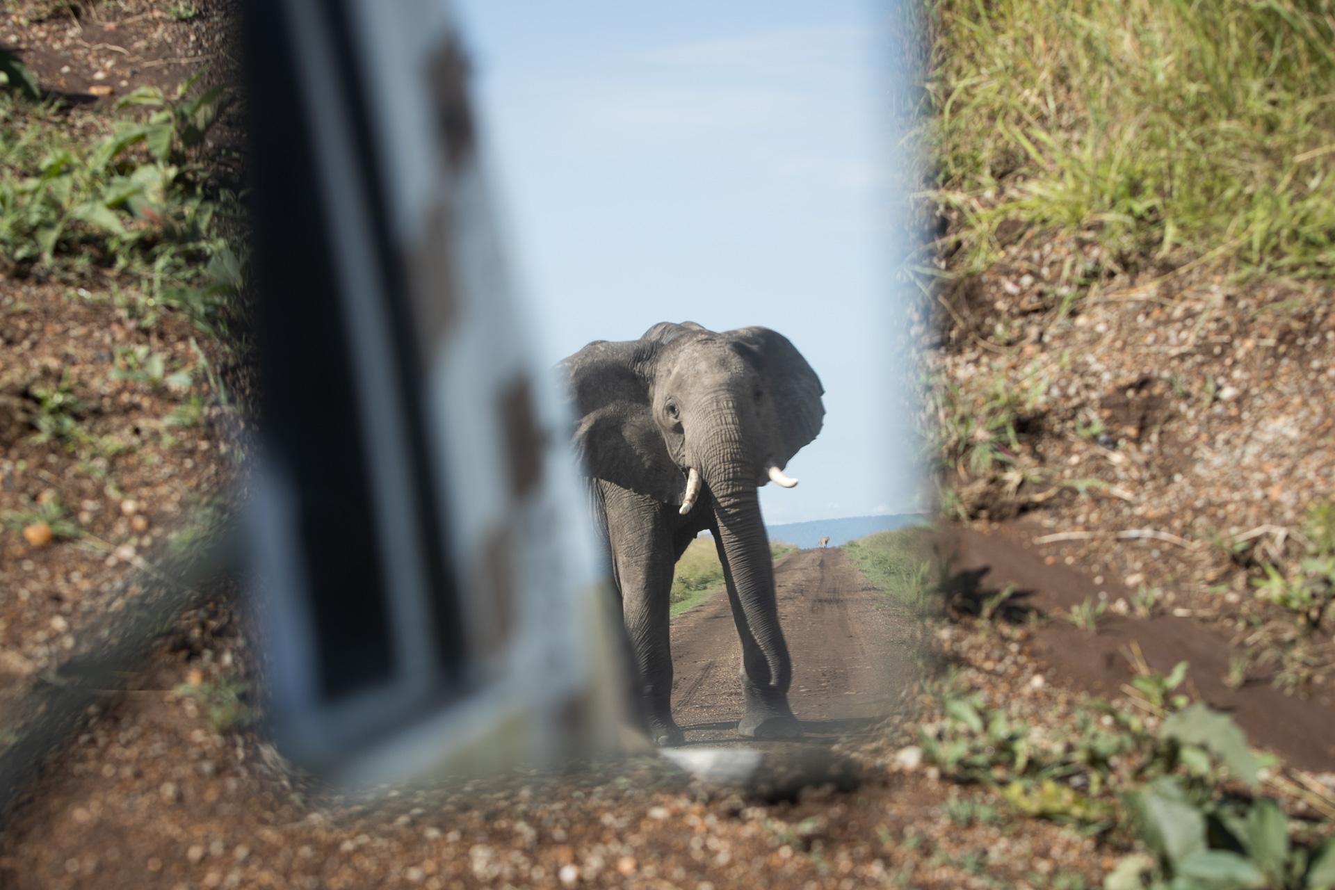 Elephant in rearview mirror