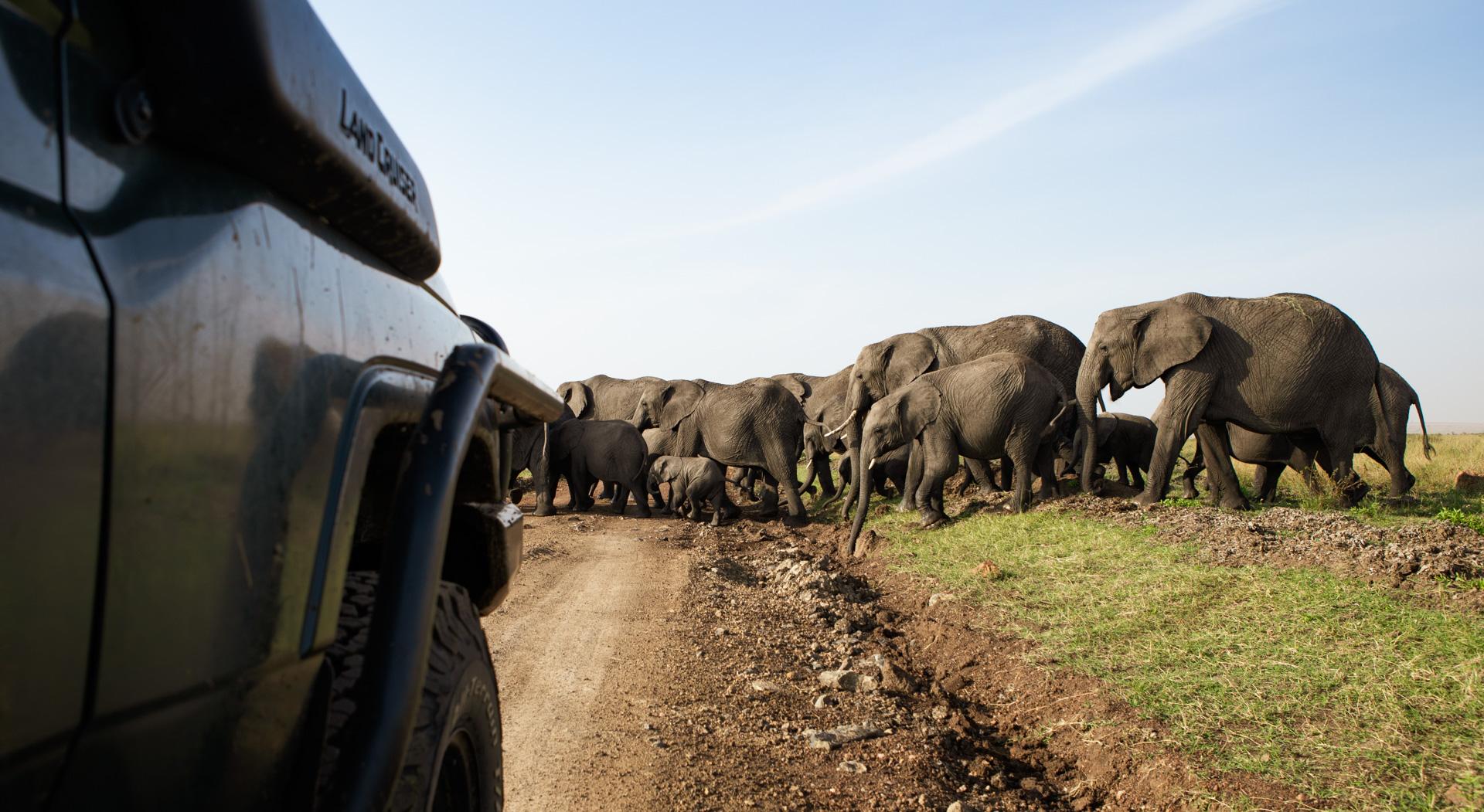 Elephants and Car