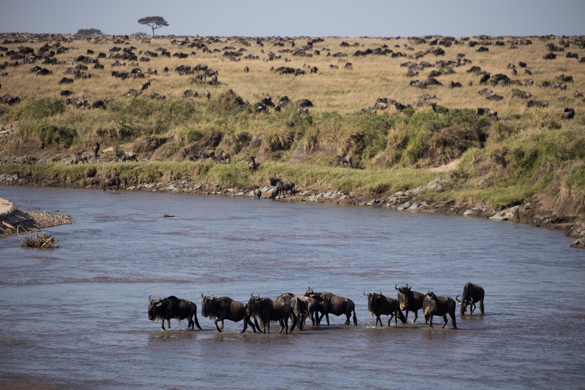 Wildebeest Sand River