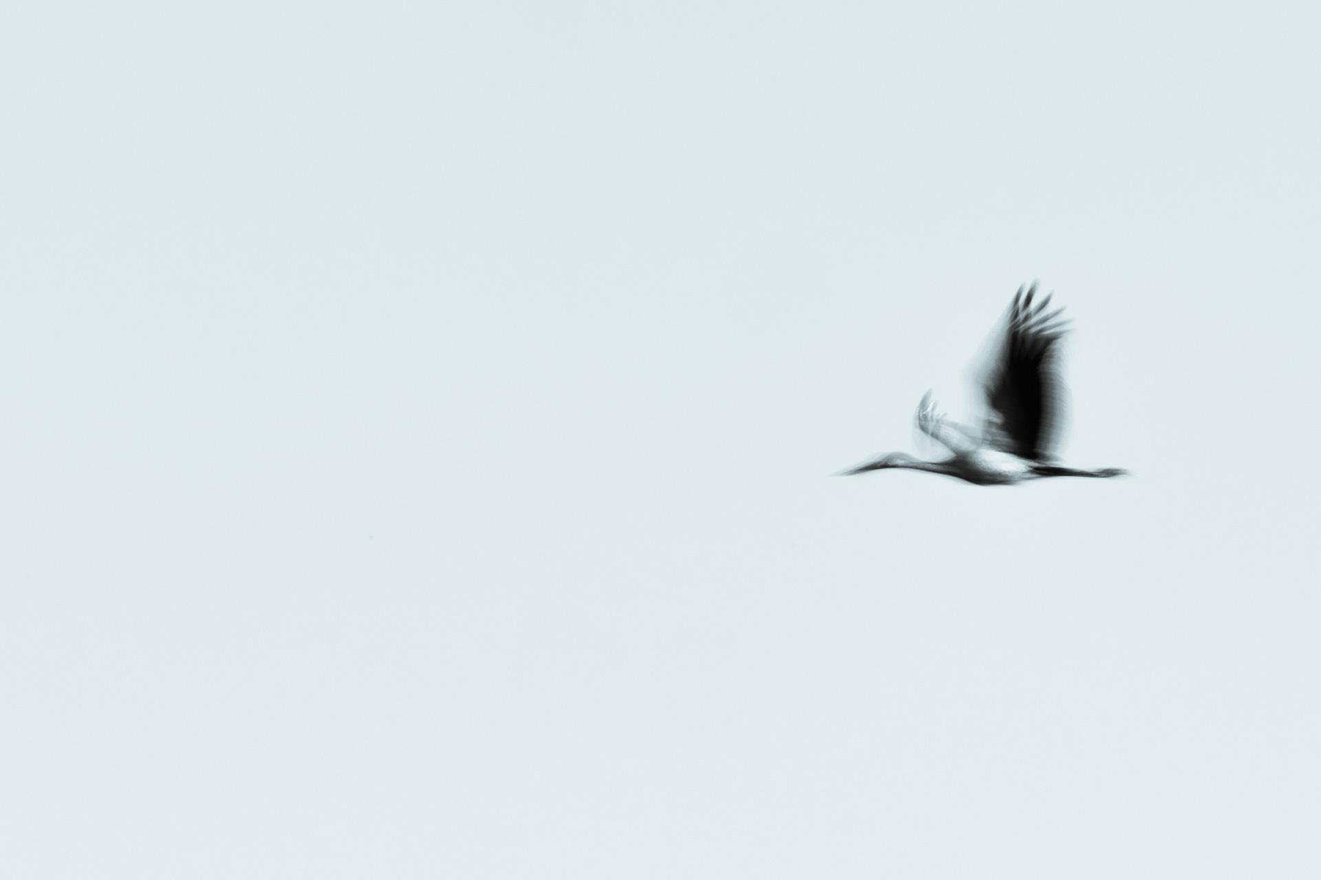 stork blur