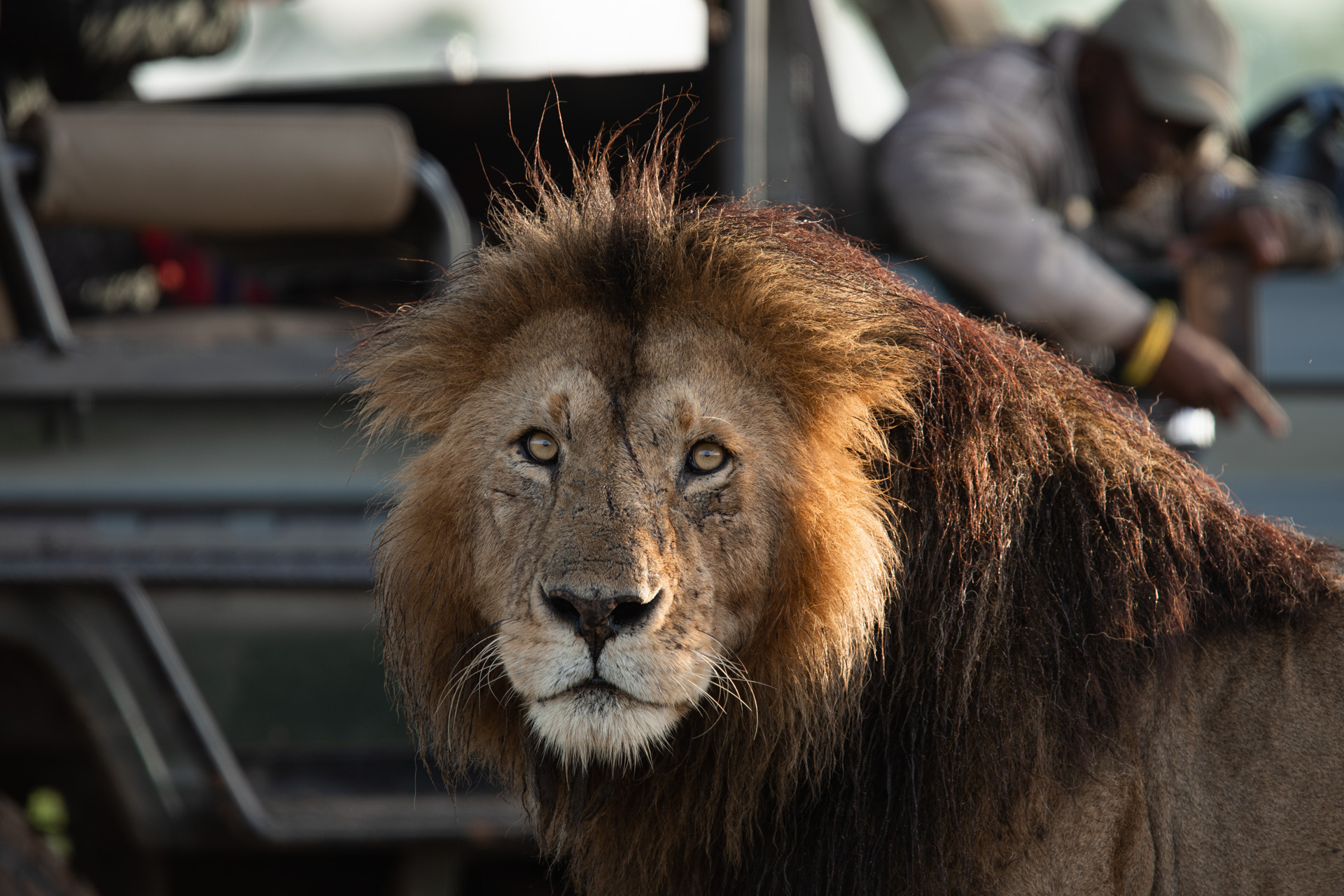 lion face and car