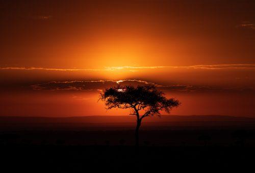 A typical Mara sunrise