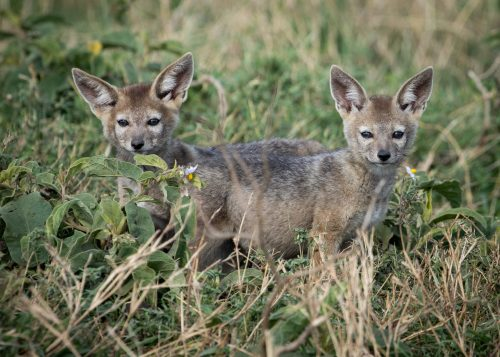 Two of the newest additions to the Mara Triangle