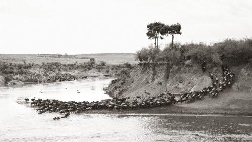A quintessential Mara River crossing