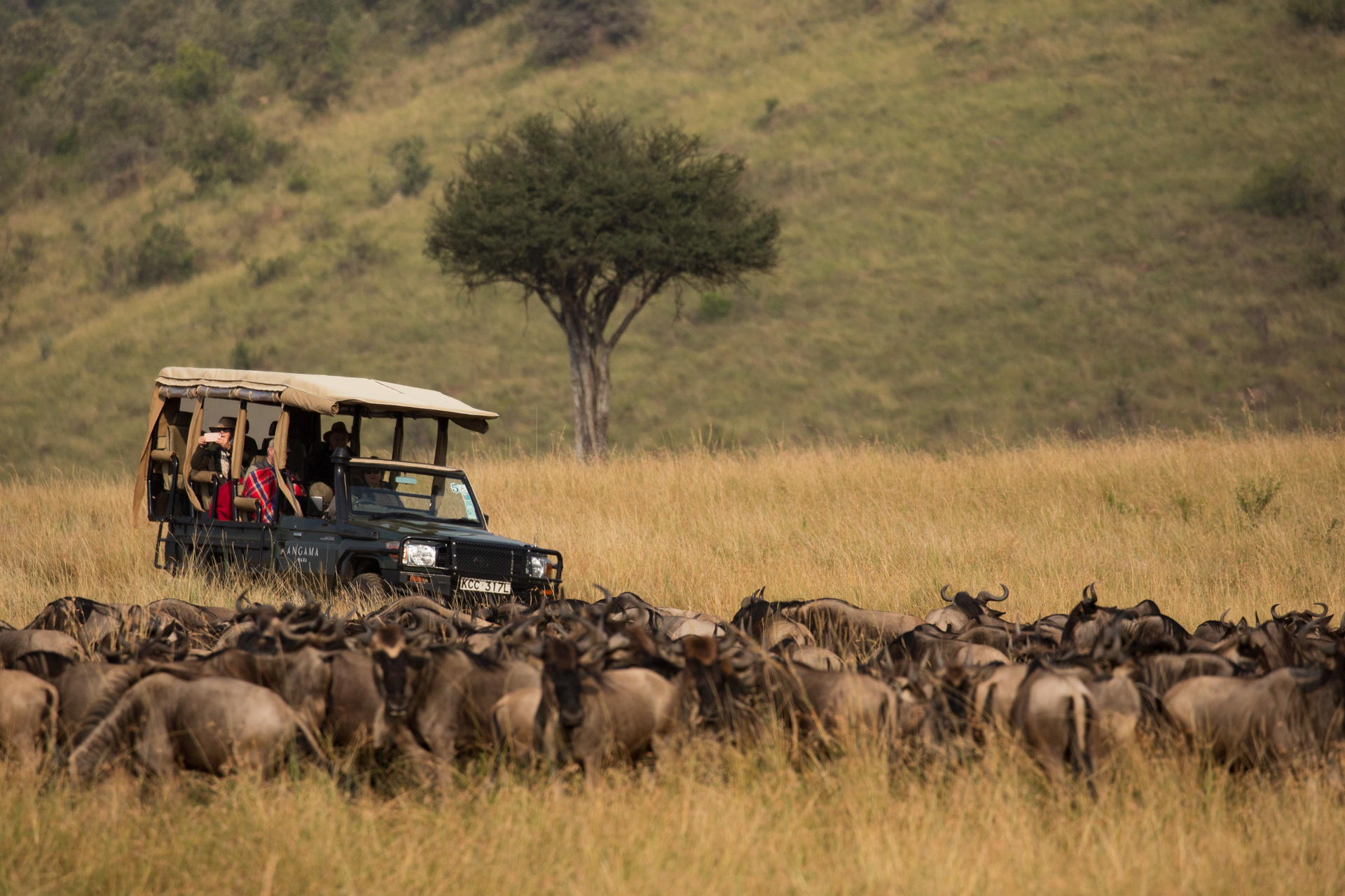 game vehicle and wildebeest