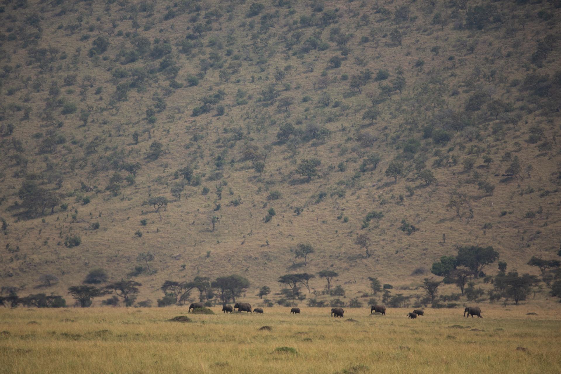 elephant on the escarpment