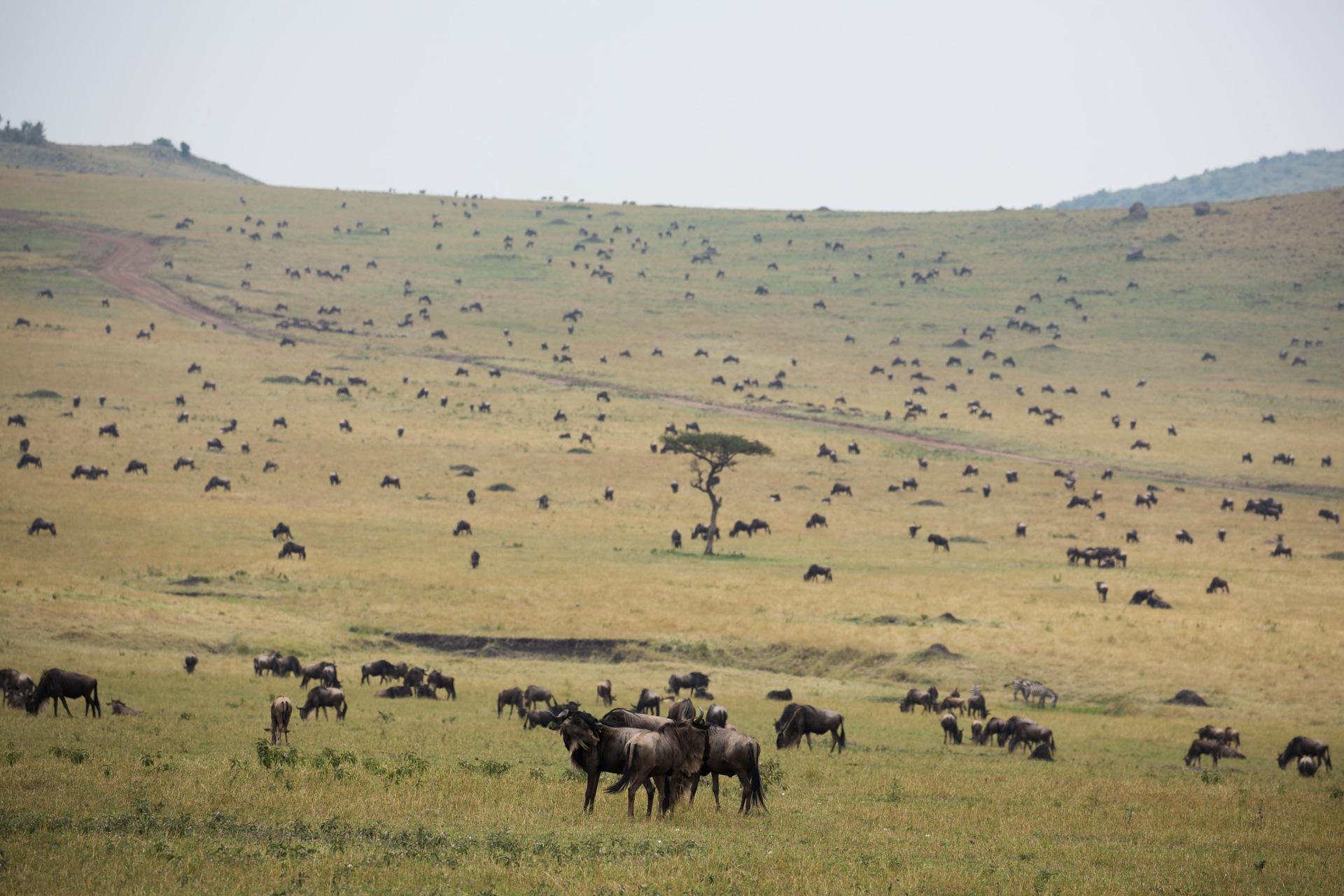 migration in landscape