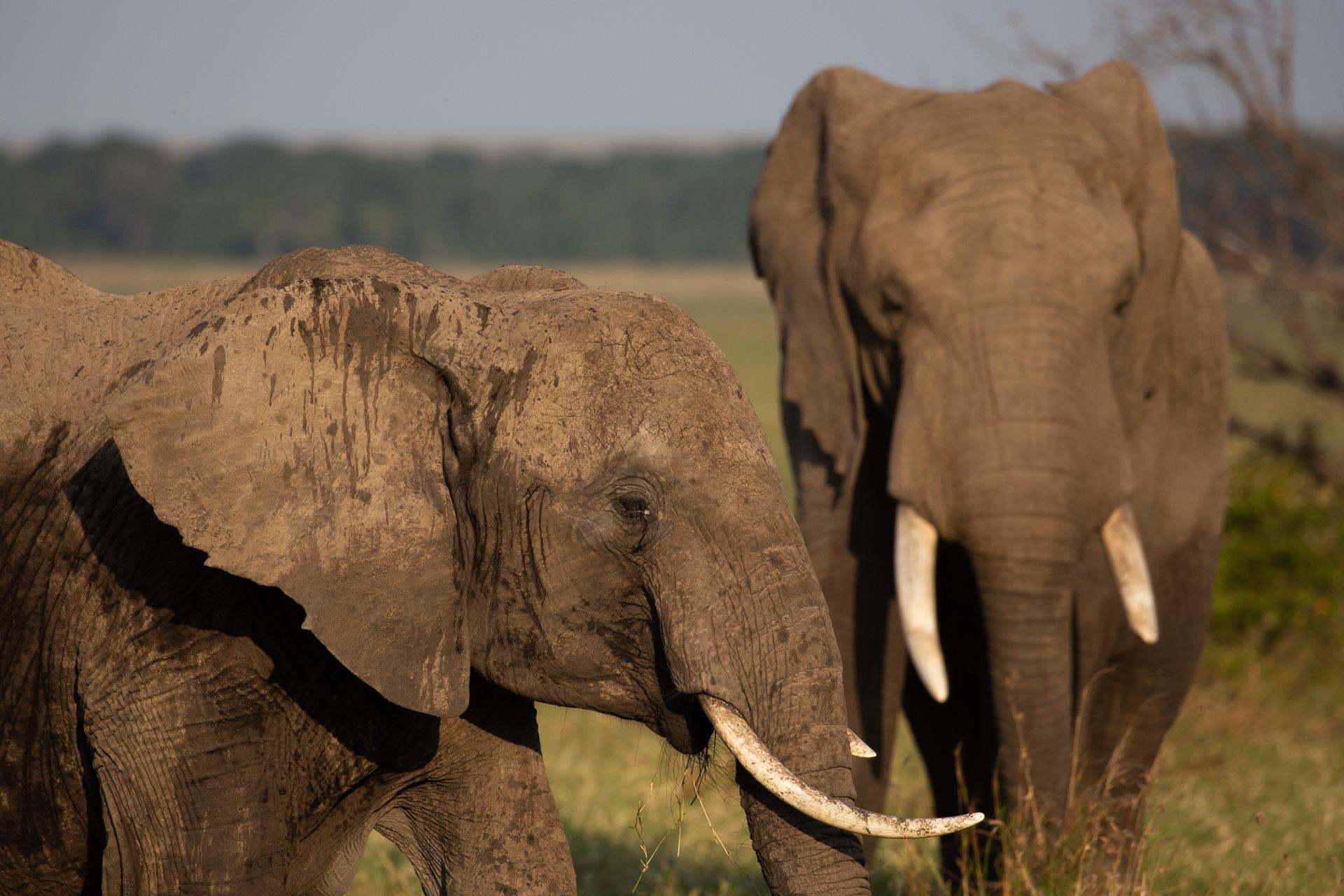 elephants close up
