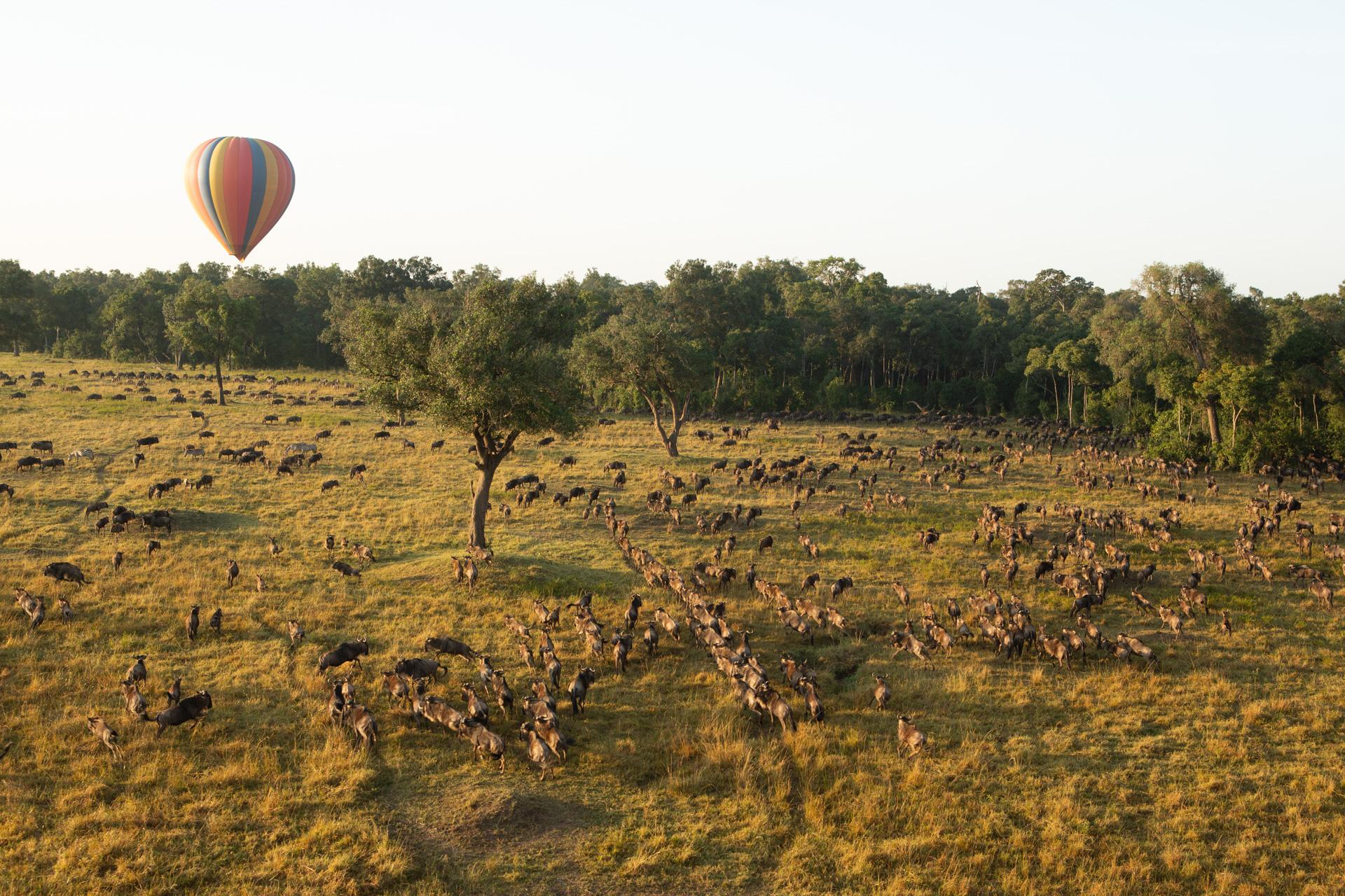 wildebeest and hot air balloon