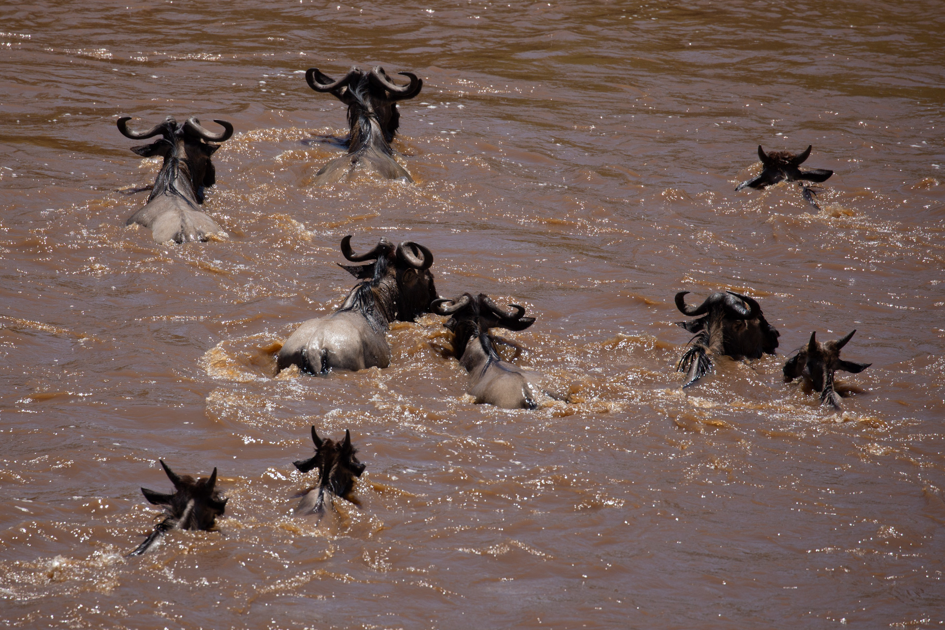 The crossing in the Mara