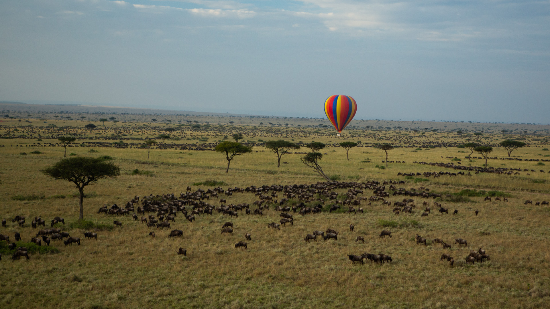 Balloon and migration