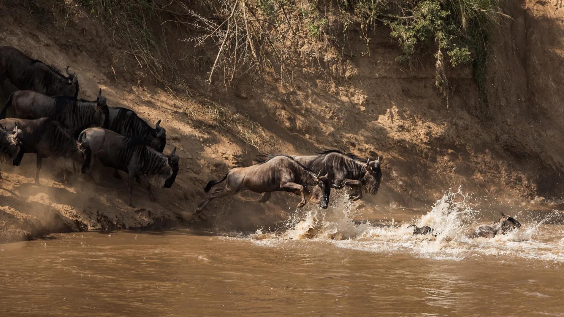 Mara river crossing 2