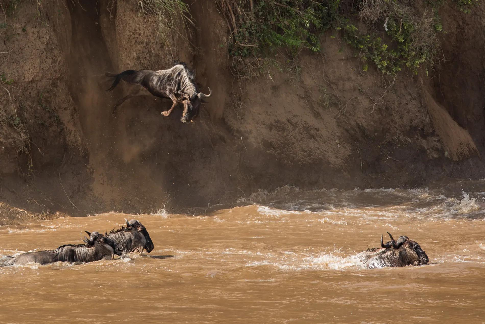 Mara river crossing 3