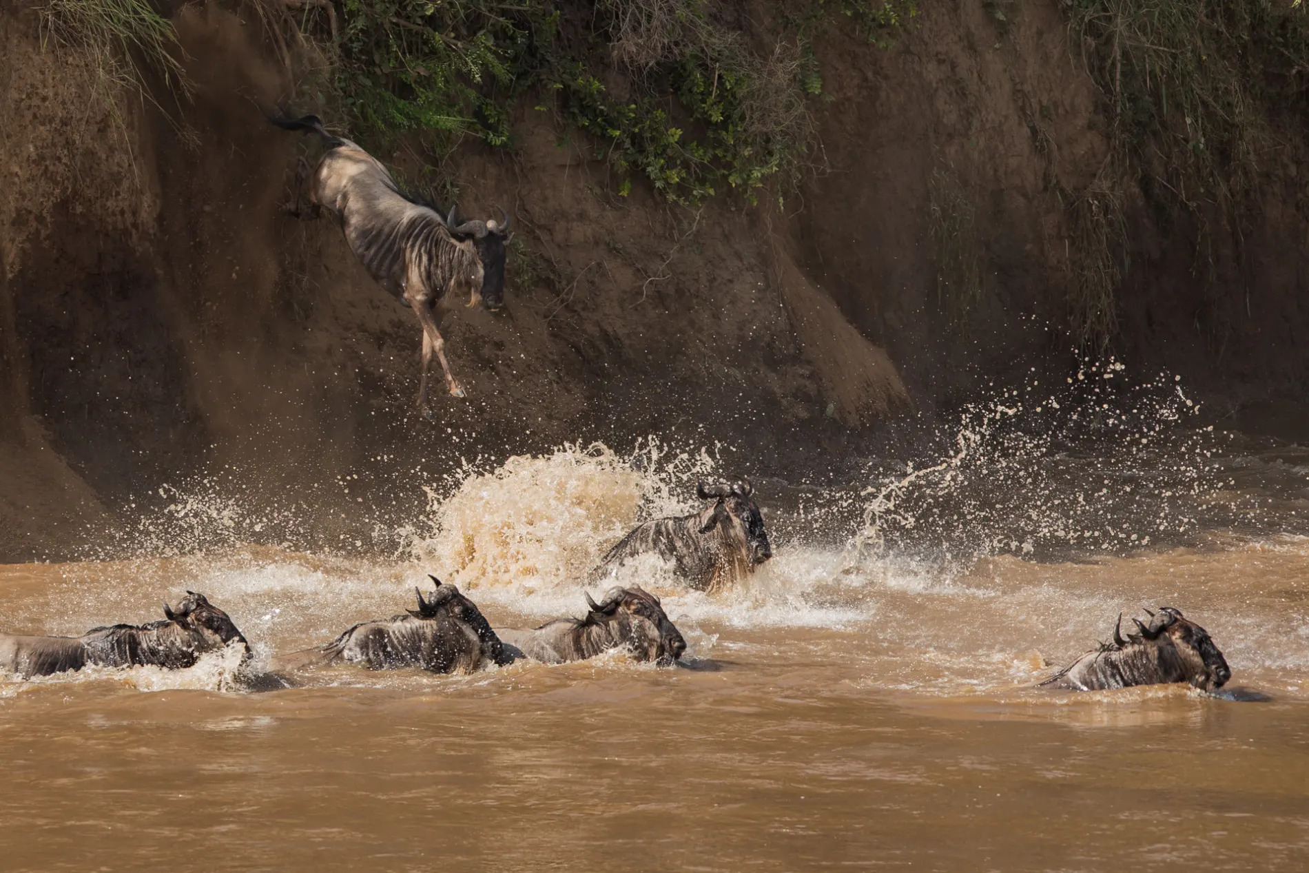 Mara river crossing 4