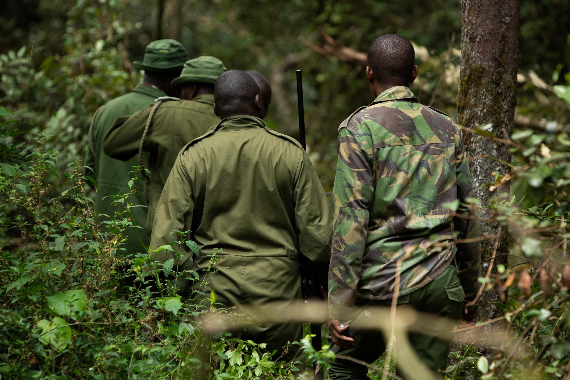 Men walking in forest