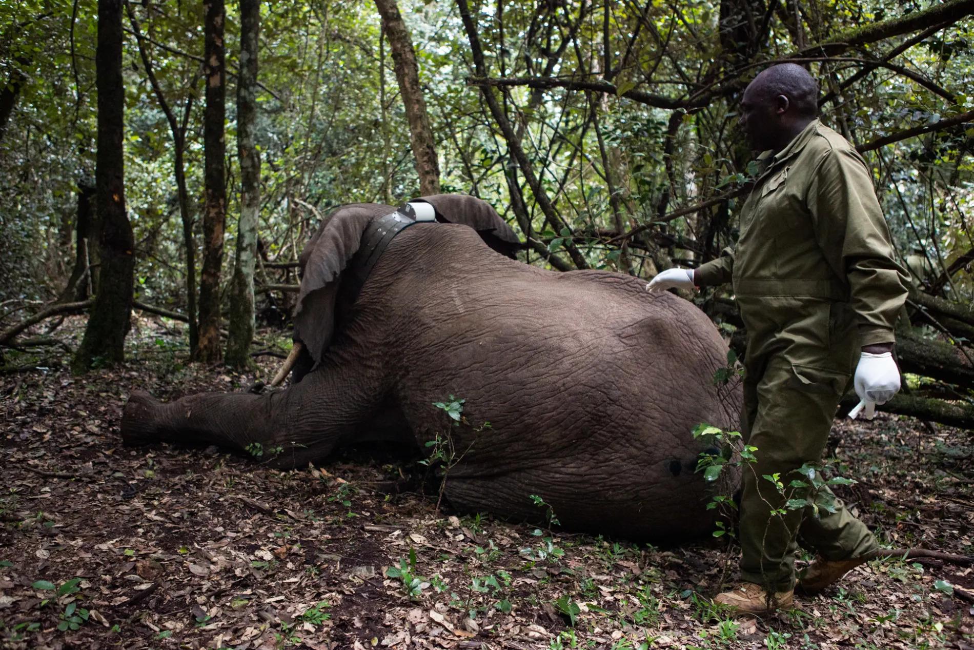 Elephant waking up