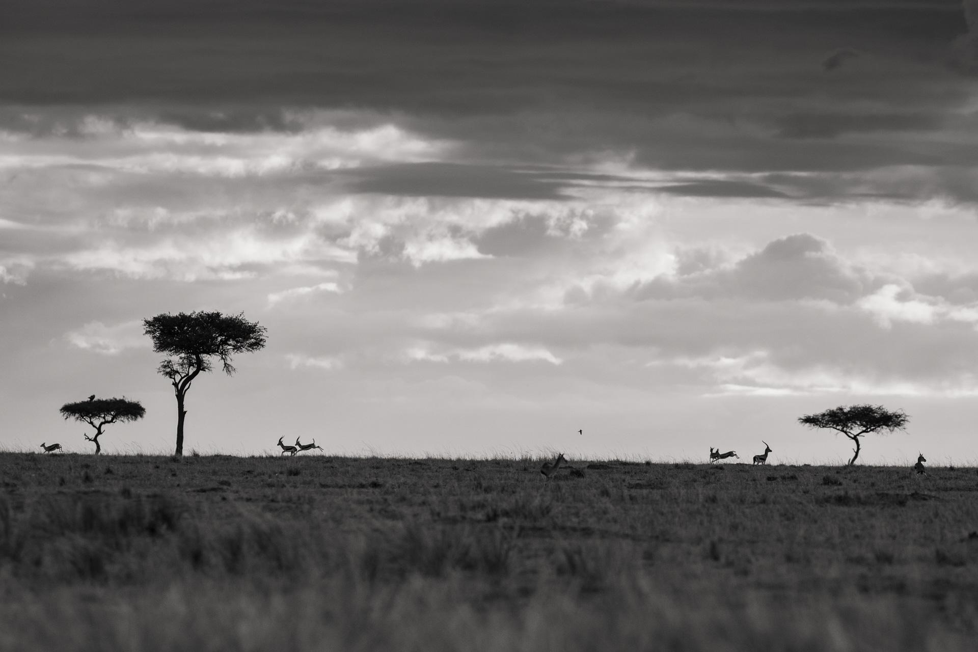 Gazelles and landscape