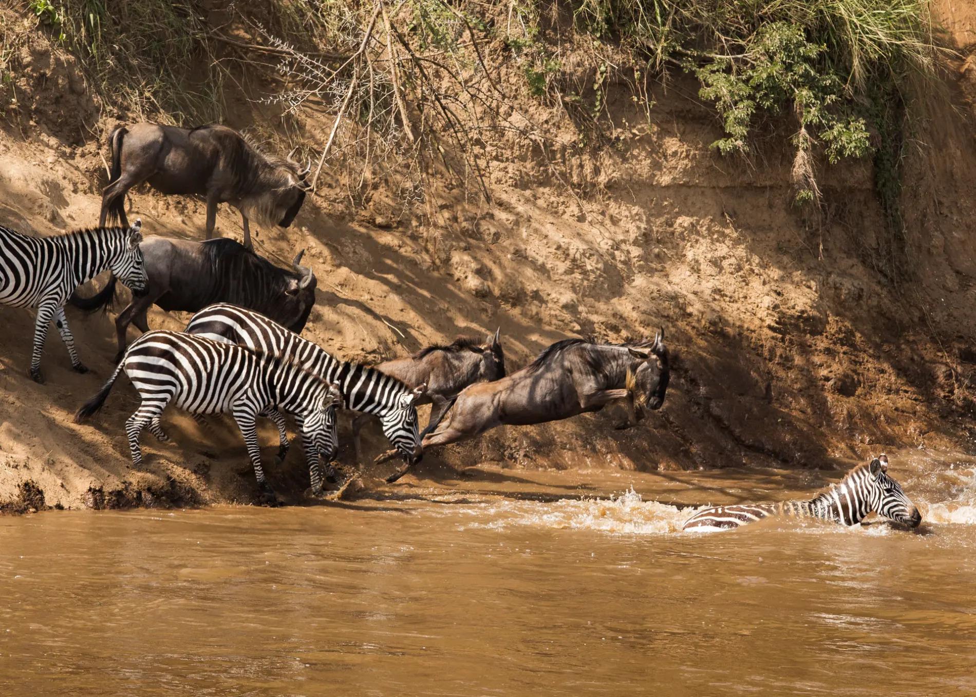 Mara river crossing 5