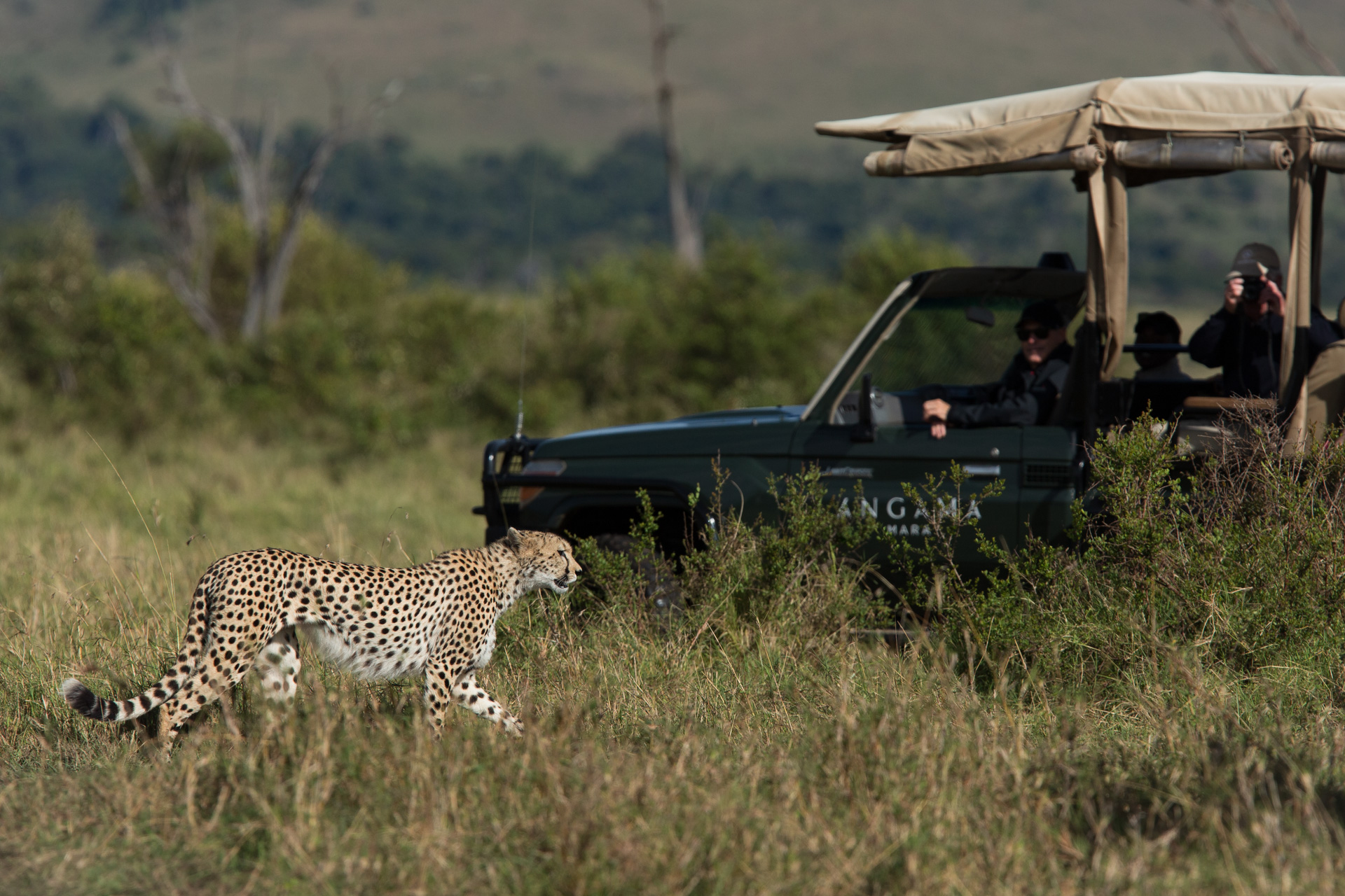 Cheetah & game vehicle