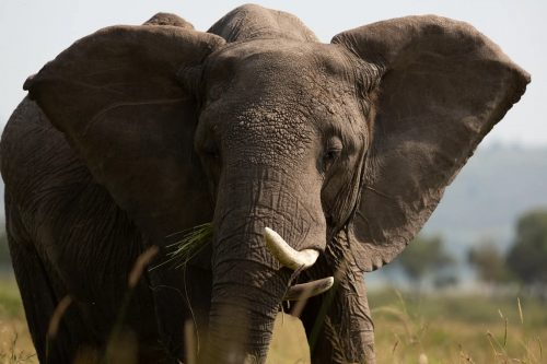 This elephant proves that all bodies are beautiful