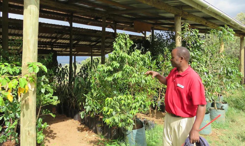 Angama Mara Trees to be planted