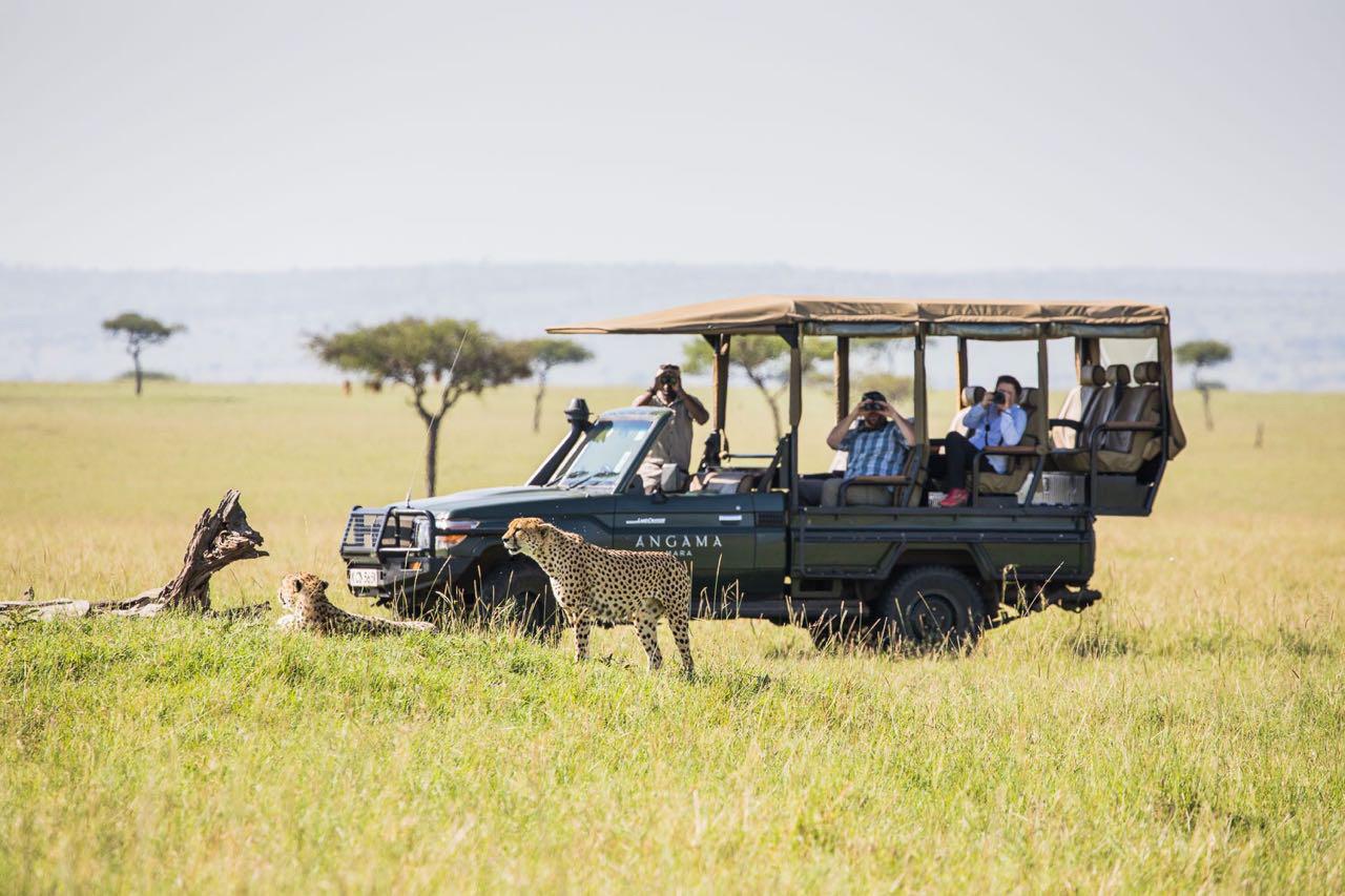 Angama-vehicle-and-cheetah
