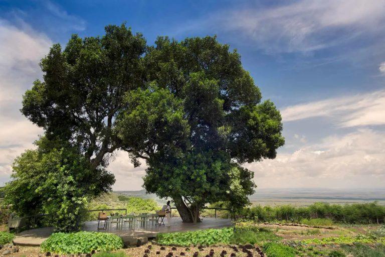 The lovely trees of the Shamba
