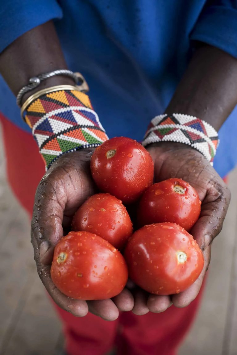 Fresh tomatoes straight from the shamba