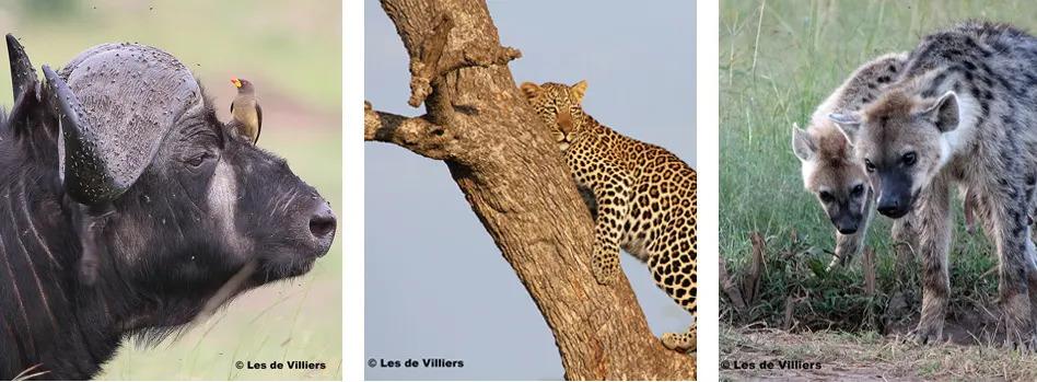 Les de Villiers collage