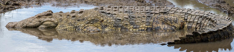 Croc Pano