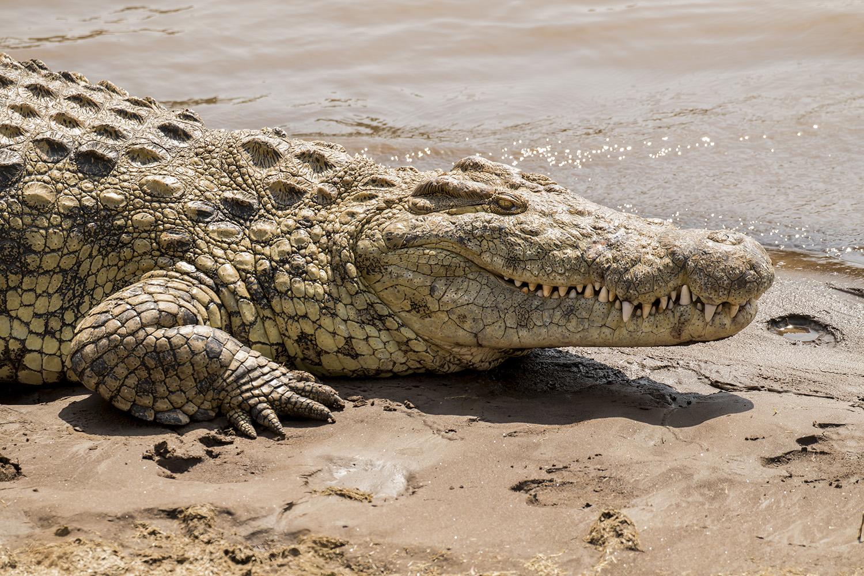 Eleni_Big Croc