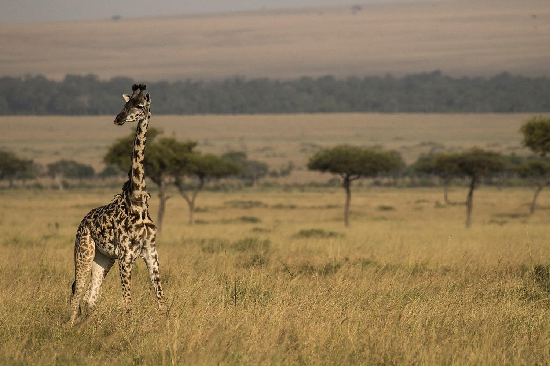 Eleni Giraffeshot
