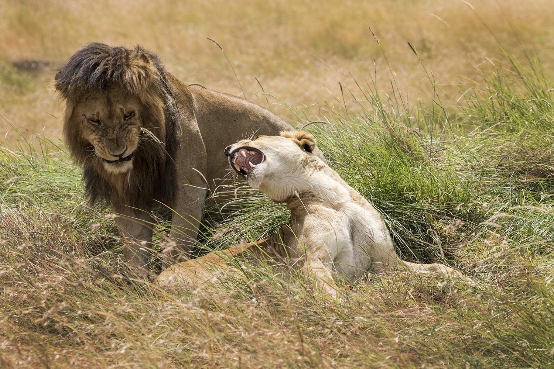 Eleni Lion Shot