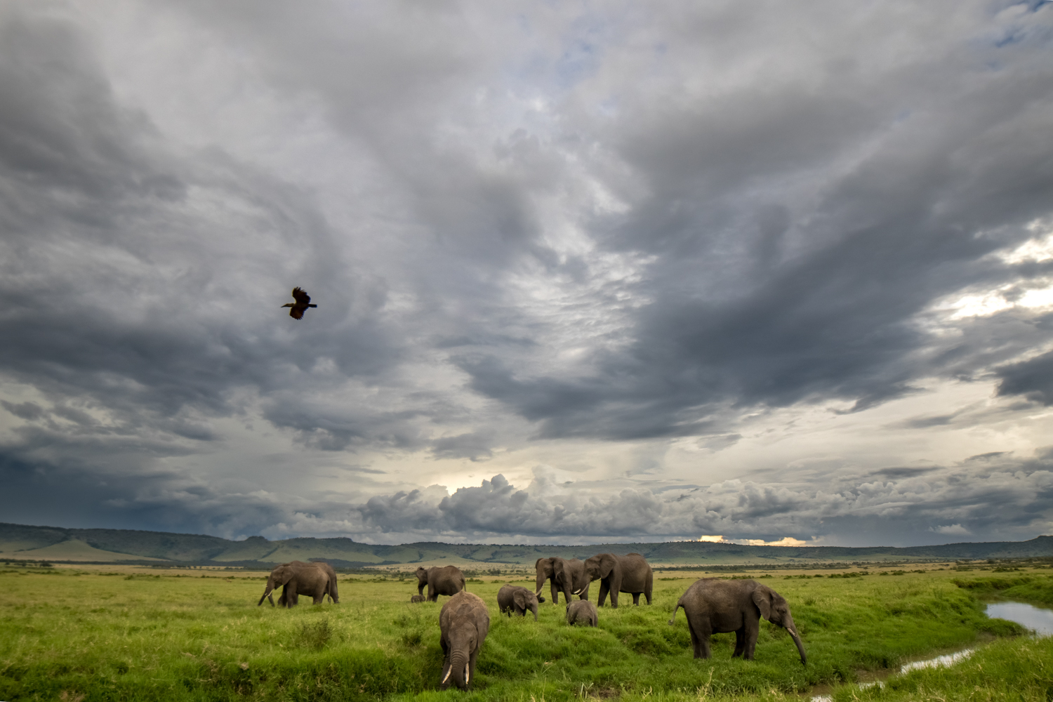 Elephants and Storms