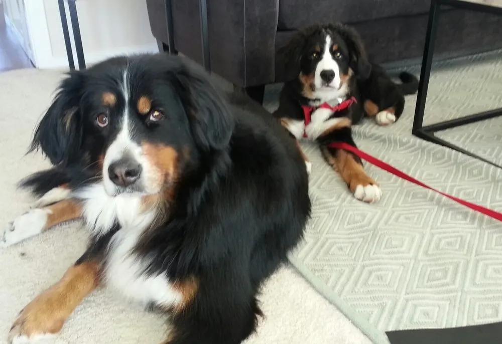 Ellen's dogs