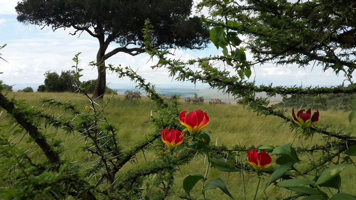 Angama Fauna and Flora
