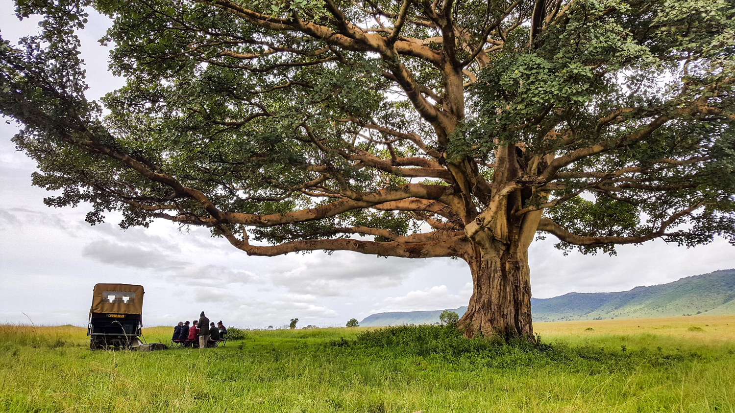 Fig-Tree-Landscape-Pano