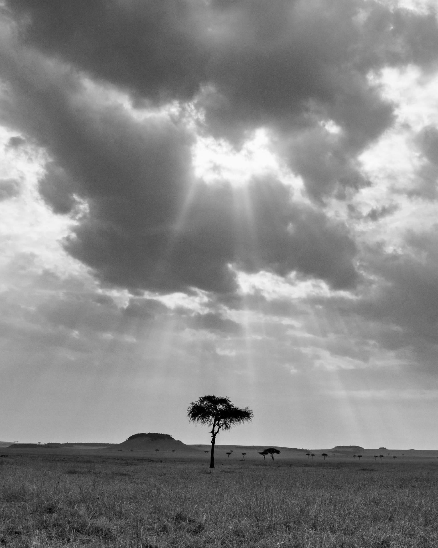 Single tree and sky