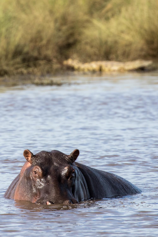 Hippo & Croc